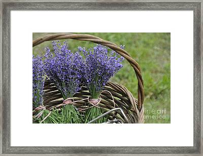 Lavender In A Basket Framed Print by Cheryl McClure
