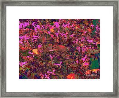 Lavender In Pink Framed Print