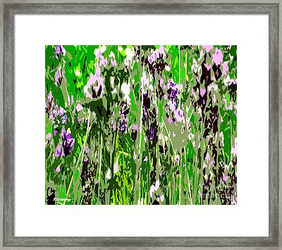 Lavender In Summer Framed Print by Patrick J Murphy