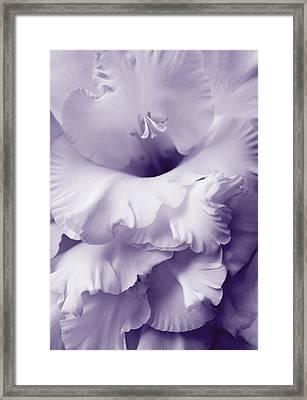 Lavender Lace Gladiola Flower Framed Print by Jennie Marie Schell