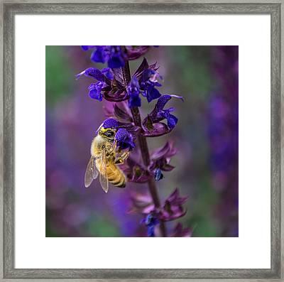 Lavender Lady Framed Print by Rhys Arithson