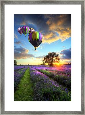 Lavender Leisure Flight Framed Print by Matthew Gibson