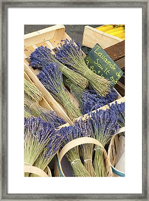 Lavender Of Provence Framed Print