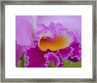 Lavender Orchid Framed Print by Aimee L Maher Photography and Art Visit ALMGallerydotcom