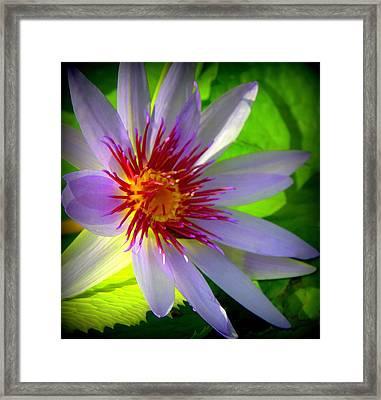 Lavender Passion Framed Print by Karen Wiles