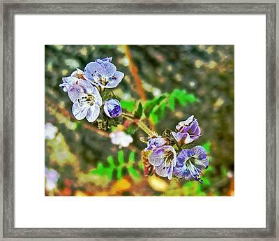Lavender Phacelia In Park Sierra Near Coarsegold-california  Framed Print by Ruth Hager