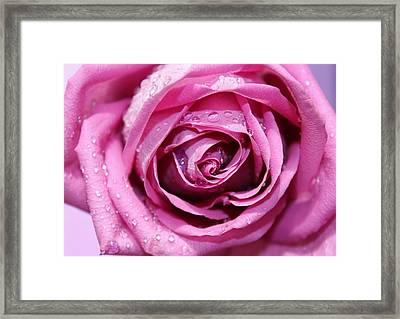 Lavender Romance Framed Print