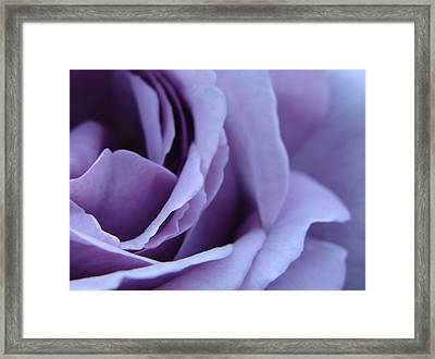 Lavender Rose Abstract Framed Print by Brian Jones