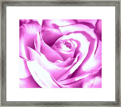 Lavender Rose  Framed Print by Janine Riley