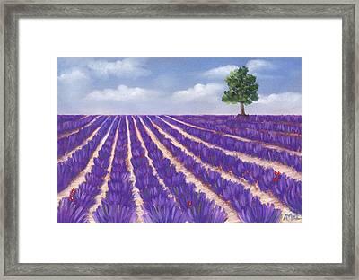Lavender Season Framed Print by Anastasiya Malakhova
