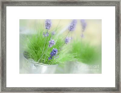 Lavender Sprigs Framed Print