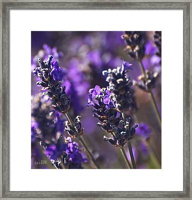 Lavender Stems Framed Print by Kari Nanstad