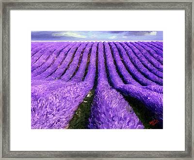 Lavender Straight Framed Print by James Shepherd