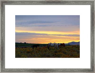 Framed Print featuring the photograph Lavender Sunrise by Lynn Hopwood
