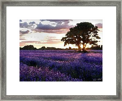 Lavender Sunset Framed Print by Cole Black