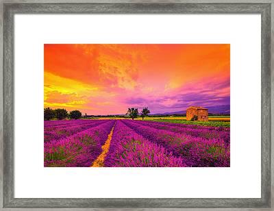 Lavender Sunset Framed Print by Midori Chan