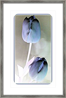 Lavender Tulips Framed Print by Danielle  Parent