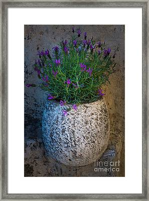 Lavender Vase Framed Print by Inge Johnsson