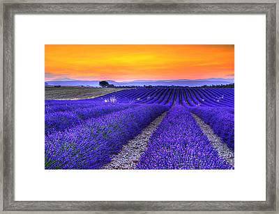 Lavender's Sunset Framed Print by Midori Chan