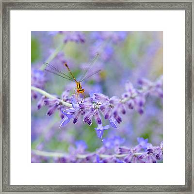 Lavender's Surprise Framed Print by Carol Toepke