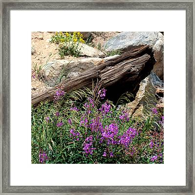 Lawn Lake Trail Framed Print by Julie Magers Soulen