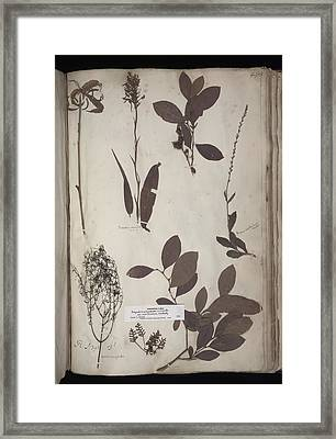 Lawson Plant Specimens Framed Print