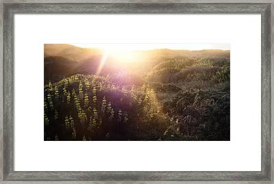 Lawsons Flowers Of Light. Framed Print