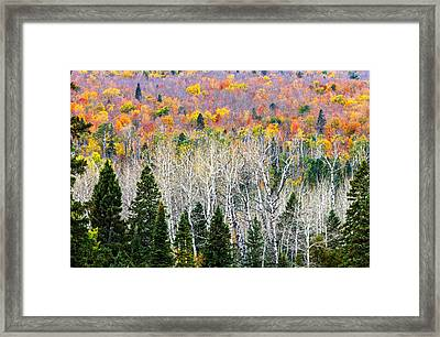 Layers Of Autumn Framed Print by Mary Amerman