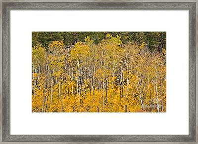 Layers Of Gold Framed Print