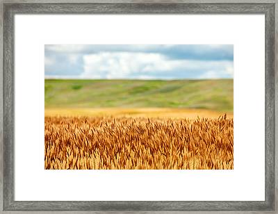 Layers Of Grain Framed Print by Todd Klassy