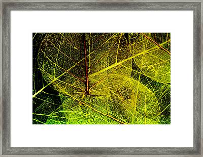 Layers Of Leaves Framed Print by Bonnie Bruno