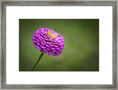 Layers Of Pink Framed Print by Christine Nunes