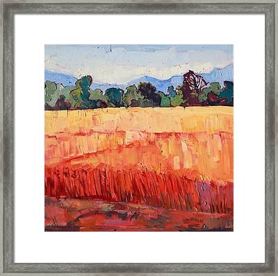 Layers Of Wheat Framed Print by Erin Hanson