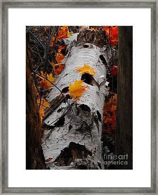 Laying Birch Framed Print