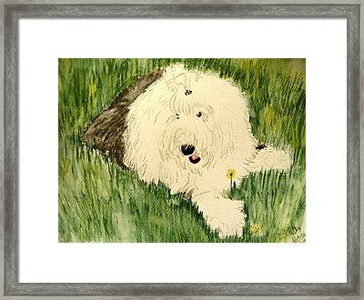 Laying In The Grass Framed Print