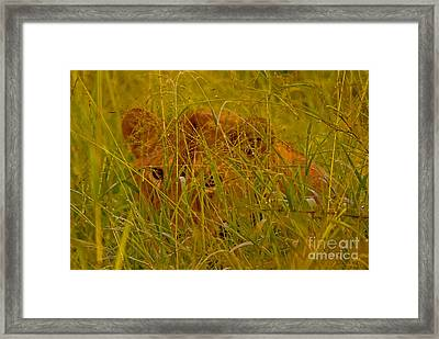 Framed Print featuring the photograph Laying In The Grass by J L Woody Wooden