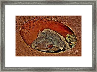 Laying Low Framed Print by Scott Allison