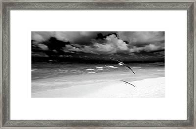 Laysan Albatross French Frigate Shoals Framed Print by Paul D Stewart