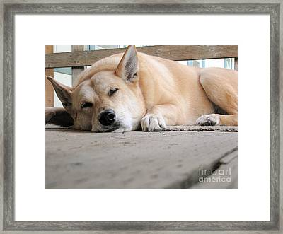 Lazin' On The Porch Framed Print by Rory Sagner