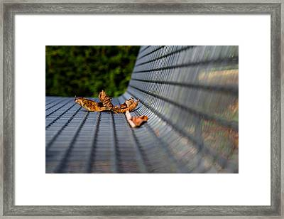 Lazing In The Sun Framed Print by Andreas Levi