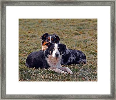 Lazy Canines Framed Print by Brian Graybill