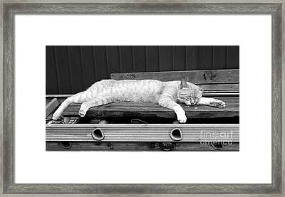 Lazy Cat Framed Print by Andrea Anderegg