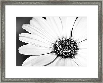 Lazy Daisy In Black And White Framed Print by Sabrina L Ryan