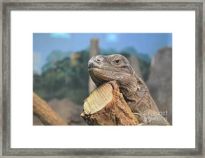 Lazy Day Framed Print by Catherine Peterson