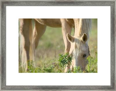 Lazy Day Framed Print by Gary Smith