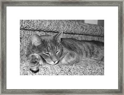 Lazy Days Framed Print by Barbara Bardzik