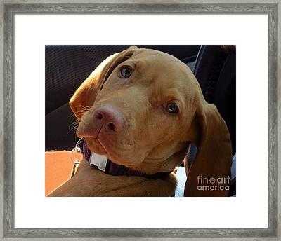 Lazy Dazy Dog Framed Print