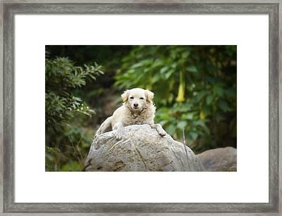 Lazy Dog Framed Print by Aged Pixel