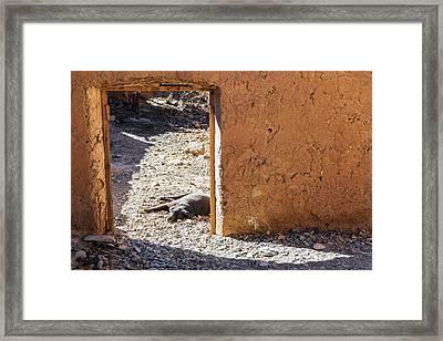 Lazy Dog In A Doorway Framed Print by Jess Kraft