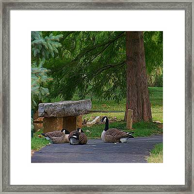 Lazy Ducks Framed Print by Julie Grace